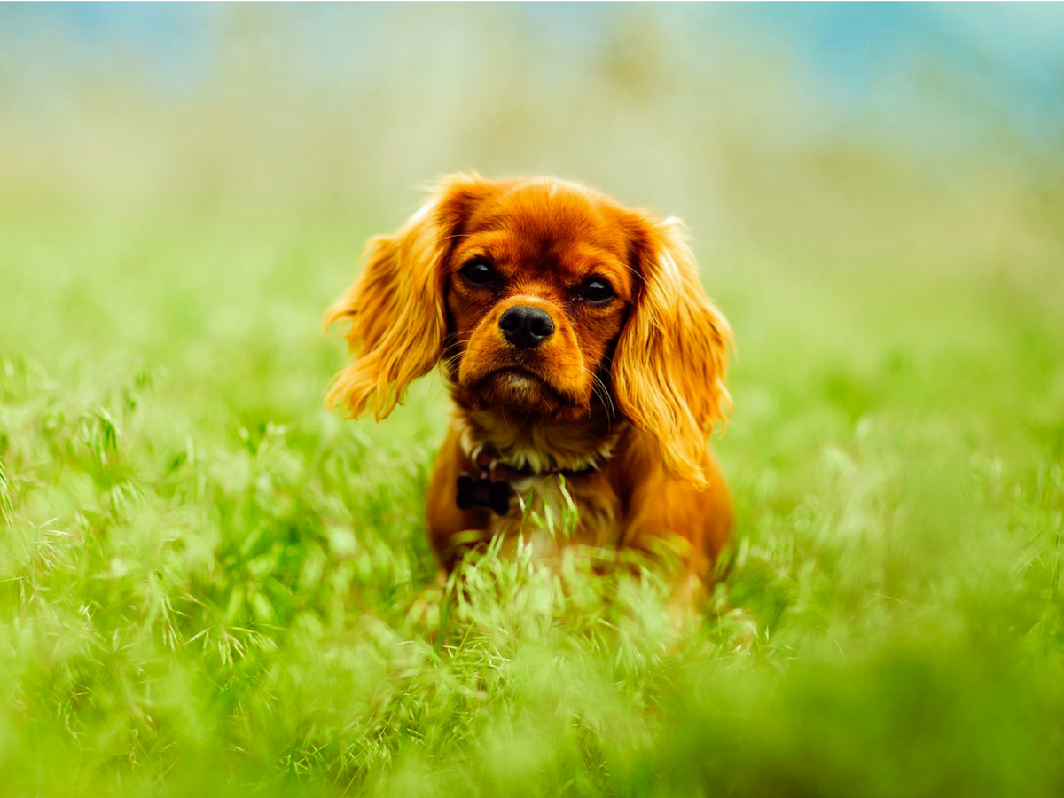 5 Steps to prepare your dog for tick season