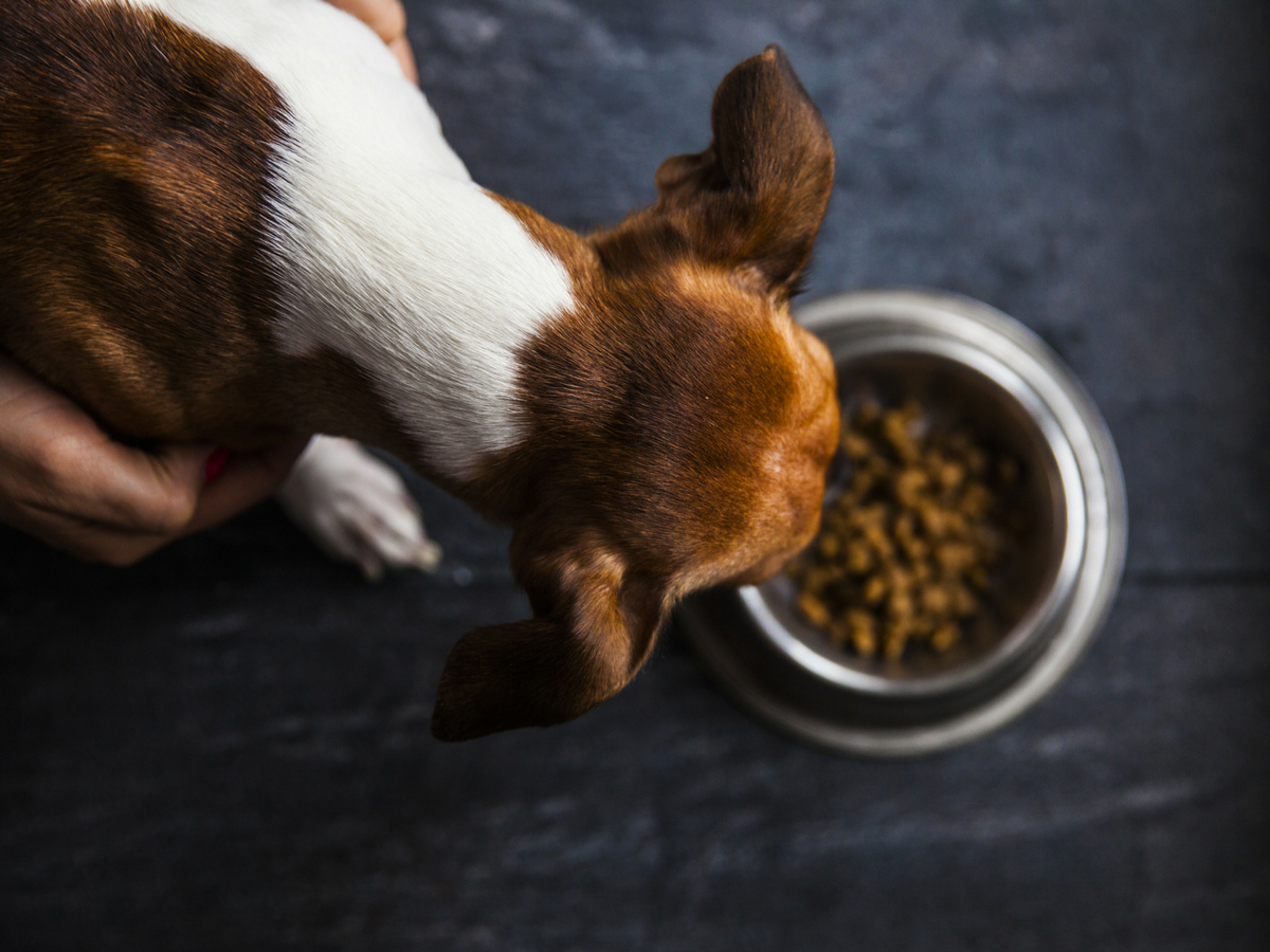A quick history of commercial pet food