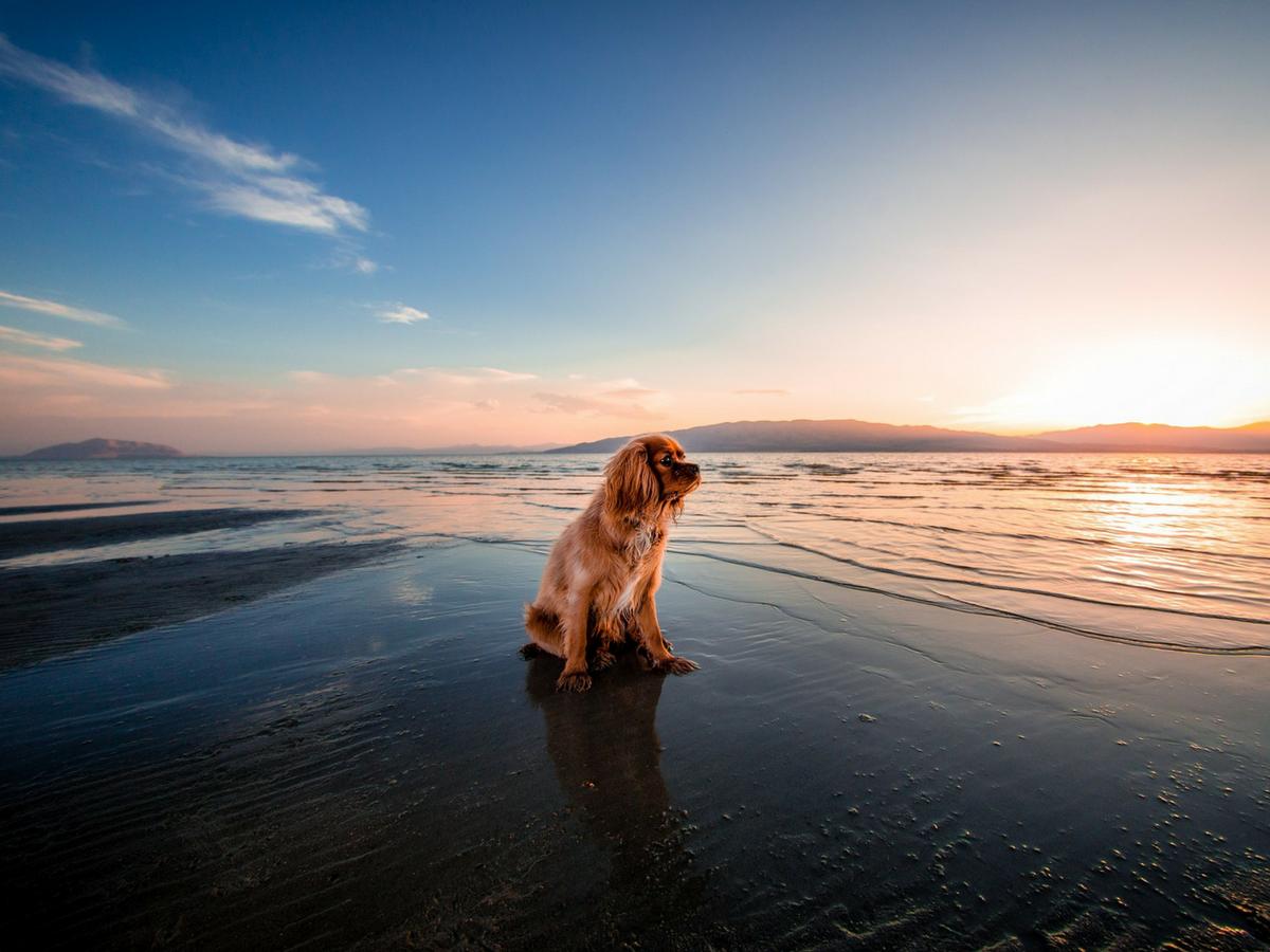 A dog-friendly Byron Bay getaway