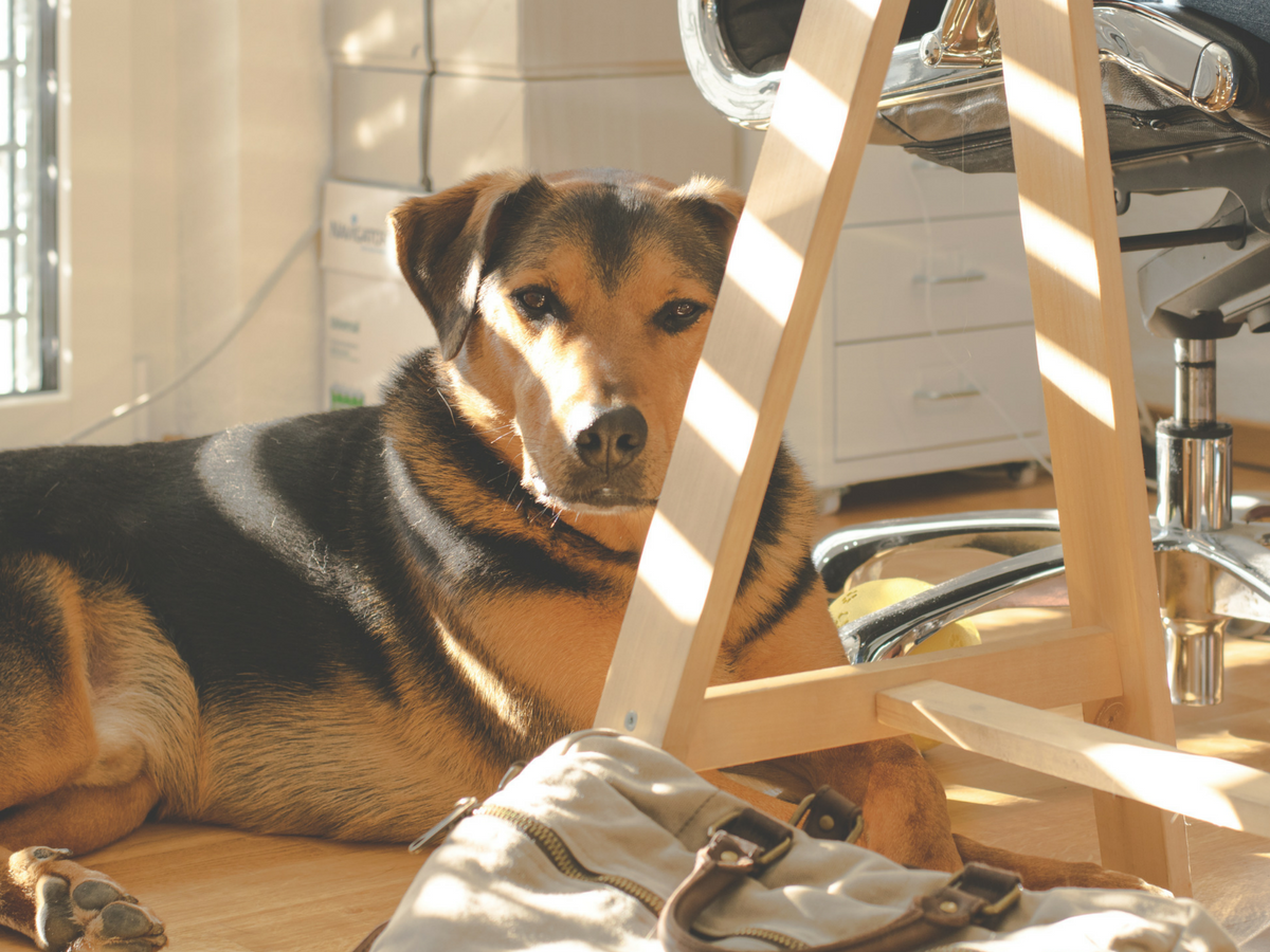 Three reasons why you should have an office pet
