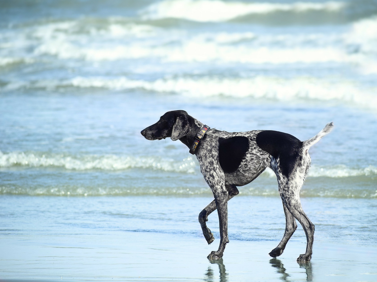 The best beaches to go with your dog in Sydney