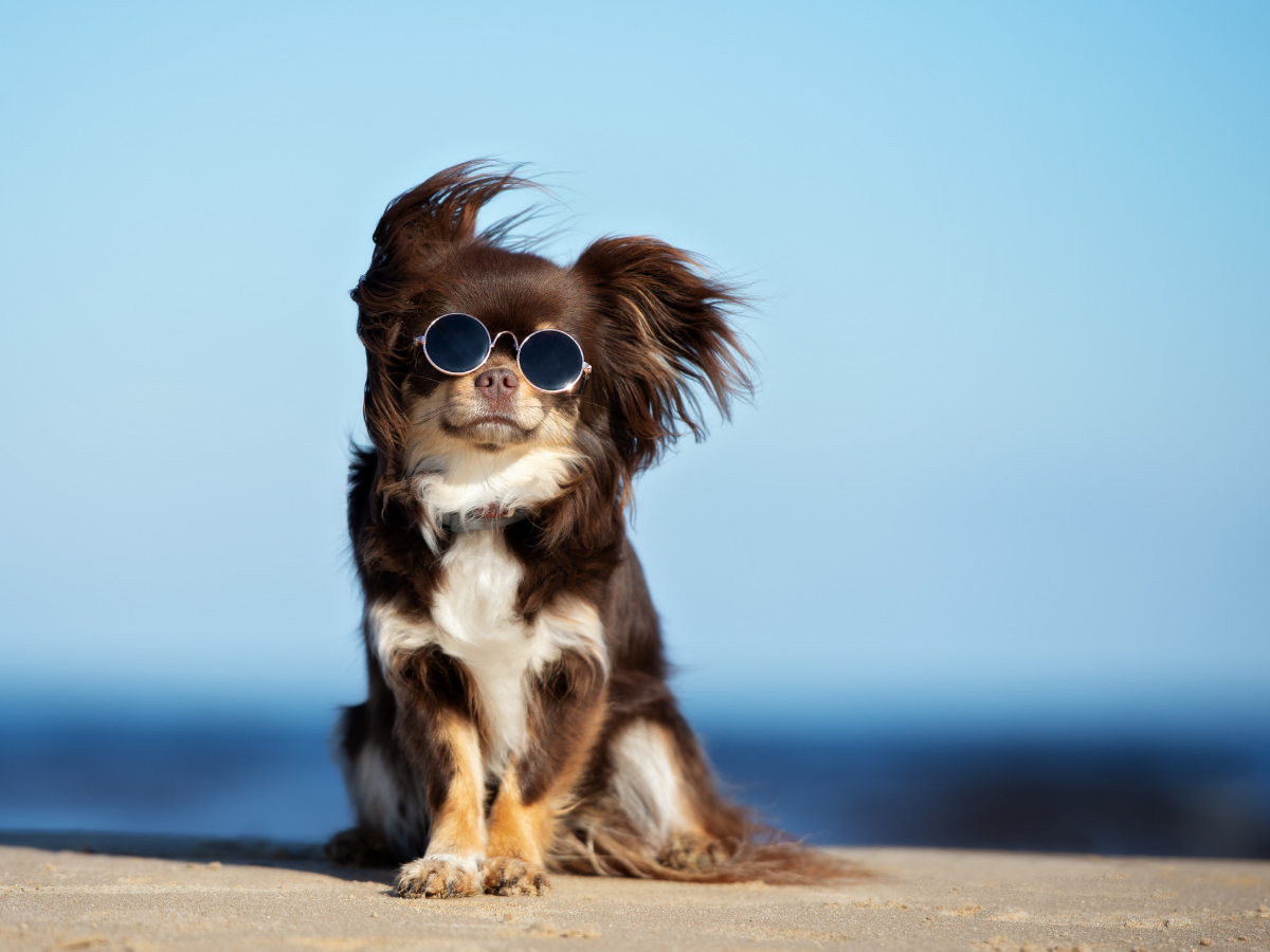 5 tips for keeping pupper sun safe this summer
