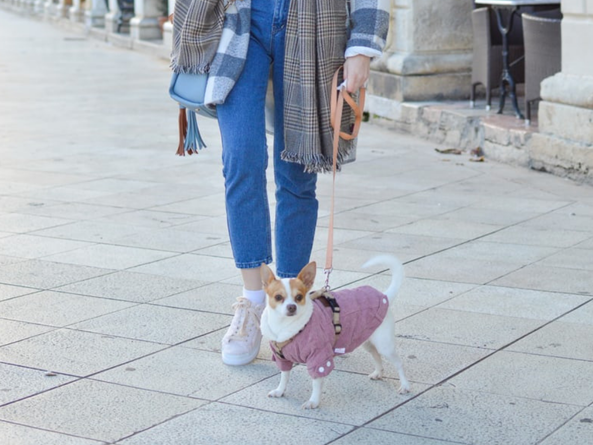 Winter jackets for dogs: Fashion or function?
