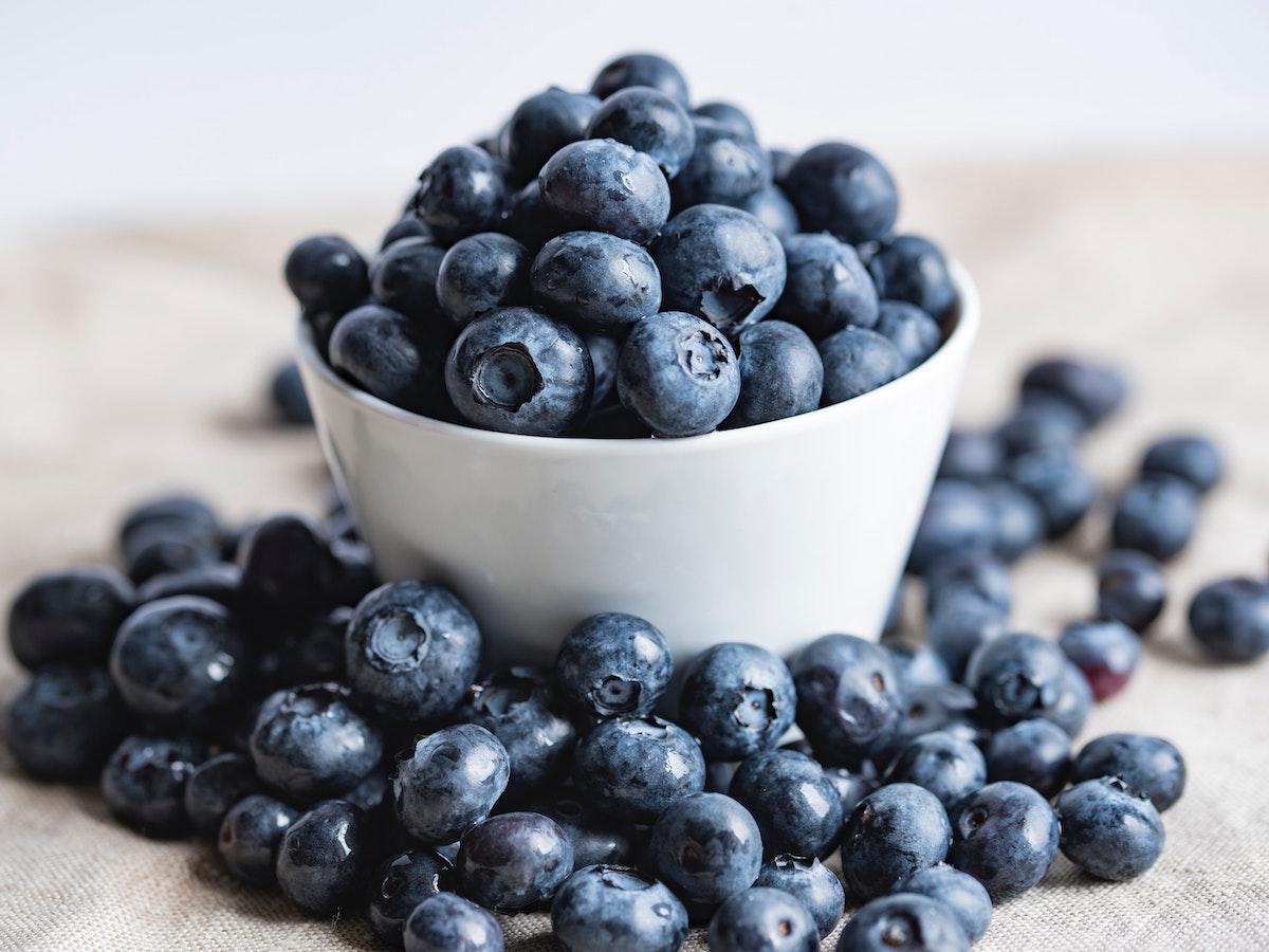 dog blueberry
