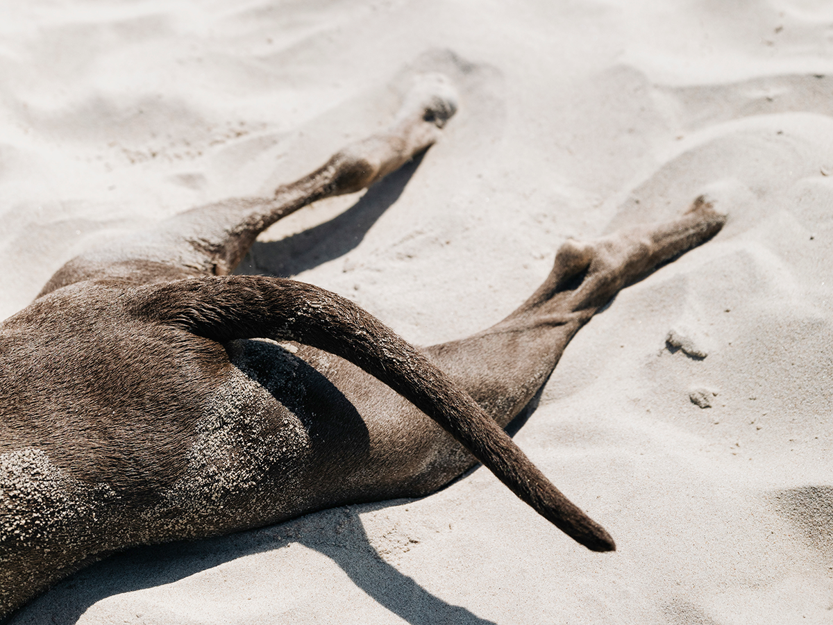 Dog enjoying the sunny weather at the beach