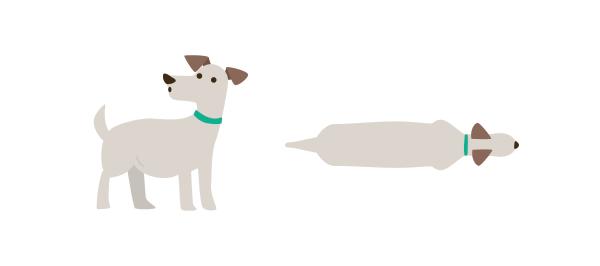 dog overweight
