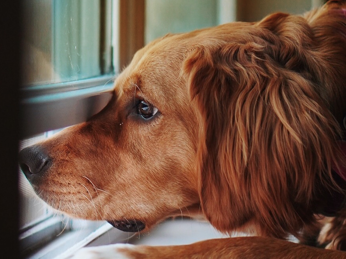 dog separation anxiety