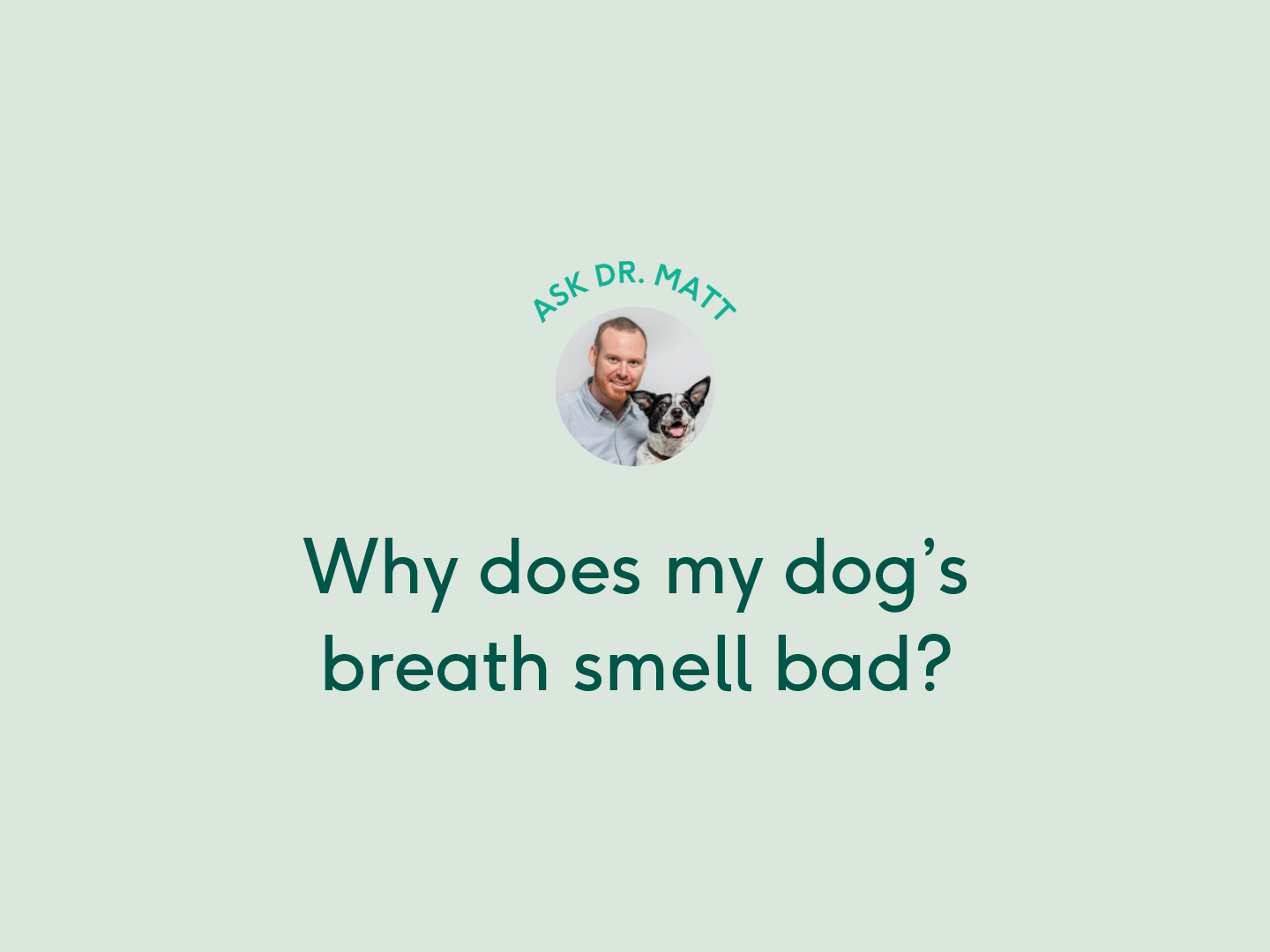 Why does my dog's breath smell bad ask Dr. Matt