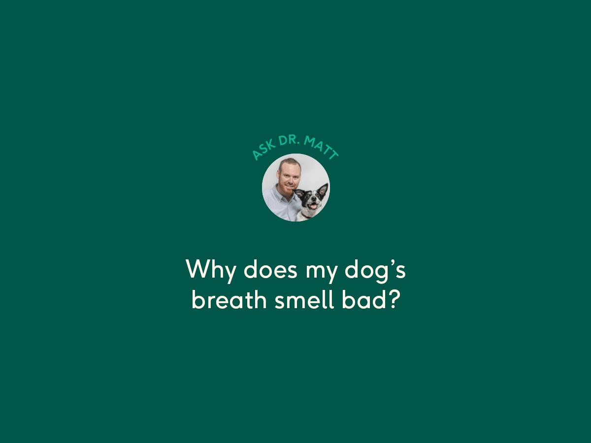 bad dog breath