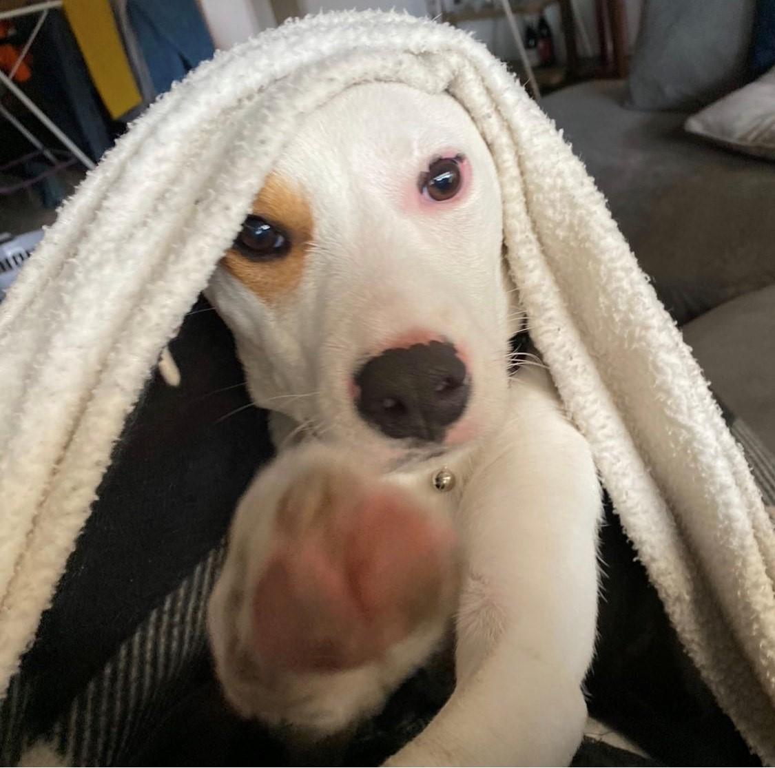 itchy dog skin