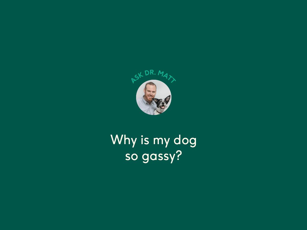 gassy dog