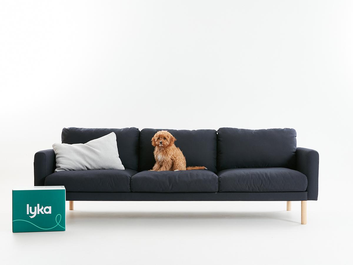 dog sofa behaviour