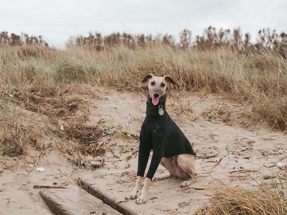 dog-friendly campsites australia