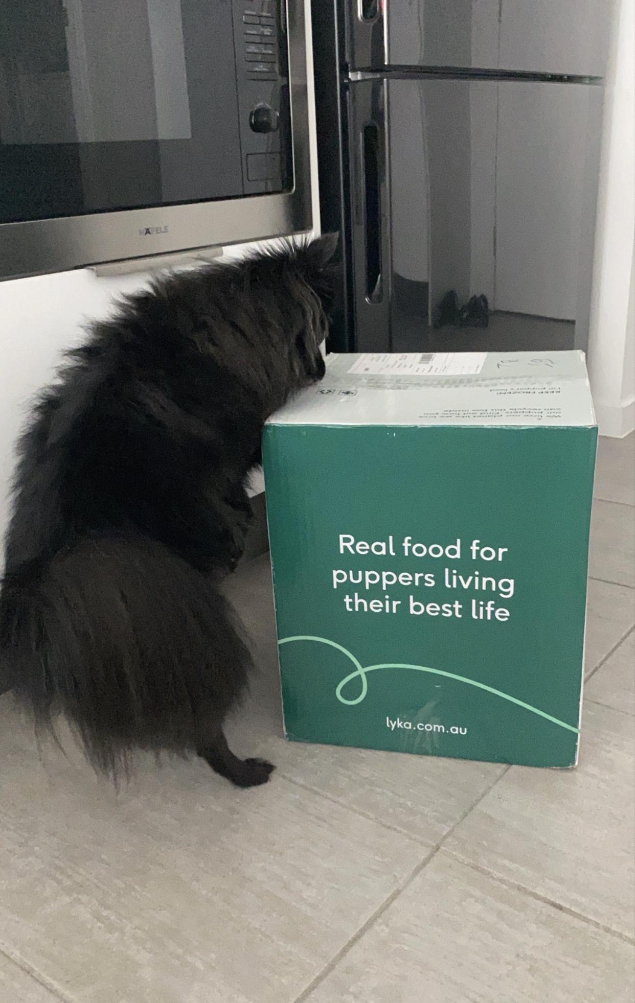 dog gut health