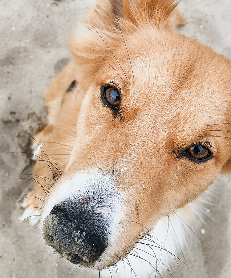 dog-friendly beaches queensland